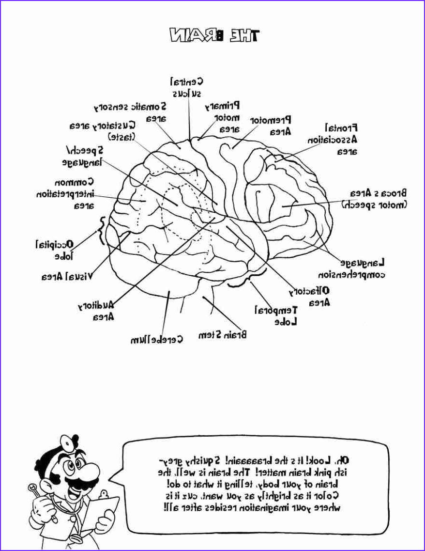 Anatomy And Physiology Coloring Workbook Answer Key Chapter 1 Luxury Collection Anatomy And Physiology Coloring Workbook Chapter 13 Pdf