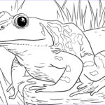 Animal Coloring Picture Inspirational Photography Zoo Animals Coloring Pages Best Coloring Pages For Kids