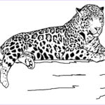 Animal Coloring Sheets Unique Photography Free Printable Cheetah Coloring Pages For Kids