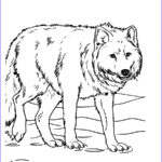 Animal Coloring Sheets Unique Photos Animal Coloring Pages For Adults Bestofcoloring