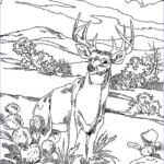 Animal Coloring Unique Photos Animal Coloring Pages For Adults Bestofcoloring