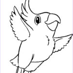 Coloring Pages Birds Beautiful Collection Cute Bird Drawing