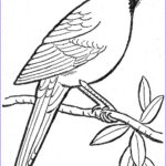 Coloring Pages Birds New Image Template For Winter Bird Art Lesson