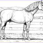 Coloring Pages Horses Beautiful Photography Realistic Coloring Pages Horses