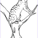 Coloring Sheets For Kids Elegant Images Free Printable Cheetah Coloring Pages For Kids