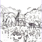 Creation Coloring Pages For Sunday School Inspirational Gallery Creation Coloring Pages Coloring Home