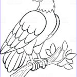 Eagle Coloring Pages Elegant Images Coloring Pages Wild Birds Cute Smiling Eagle Stock Vector