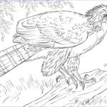 Eagle Coloring Pages Inspirational Collection Philippine Eagle Perched On A Branch Coloring Page