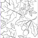 Fall Coloring Pages Free Printable Inspirational Gallery Autumn Leaves And Acorns Coloring Page