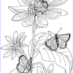 Free Adult Coloring Pages Printable Unique Collection Free Printable Coloring Pages Fairies For Adults