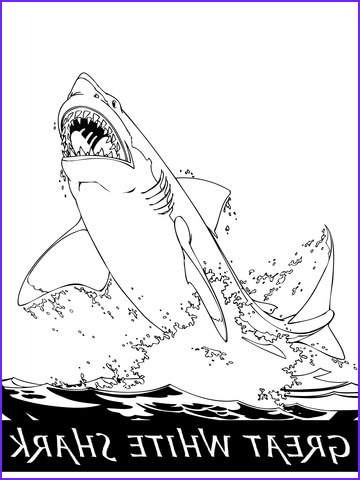 Great White Shark Coloring Pages Beautiful Collection Great White Shark Jumping Out Of the Water Coloring Page