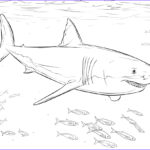 Great White Shark Coloring Pages Beautiful Photos Shark Color Pages