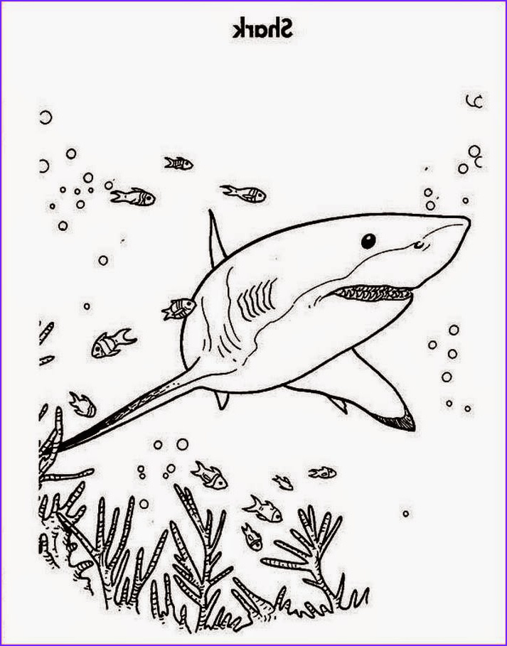 Great White Shark Coloring Pages Beautiful Stock Coloring Pages Shark Coloring Pages Free and Printable