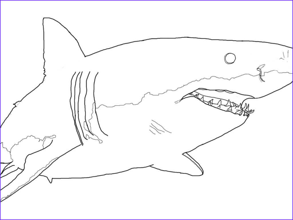 Great White Shark Coloring Pages Elegant Images 42 Megalodon Shark Coloring Pages Megalodon Shark