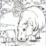 Kids Coloring Pages Cool Gallery Free Printable Hippo Coloring Pages For Kids