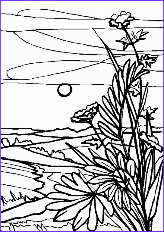 13 New Landscape Coloring Book Images