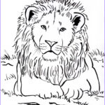 Lion Coloring Books Cool Photos Week 3 Upside Down Lots Of Animal Coloring Pages Lion