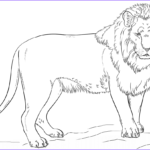 Lion Coloring Page Luxury Photos Standing Lion Coloring Page