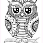 Owl Coloring Book For Adults Awesome Images 17 Images About Adult Coloring Pages On Pinterest