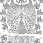 Owl Coloring Book For Adults Luxury Photos 1176 Best Images About Ö Adult Colouring Owls Birds