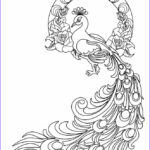Peacock Coloring Pages Awesome Stock Printable Peacock Coloring Pages For Kids