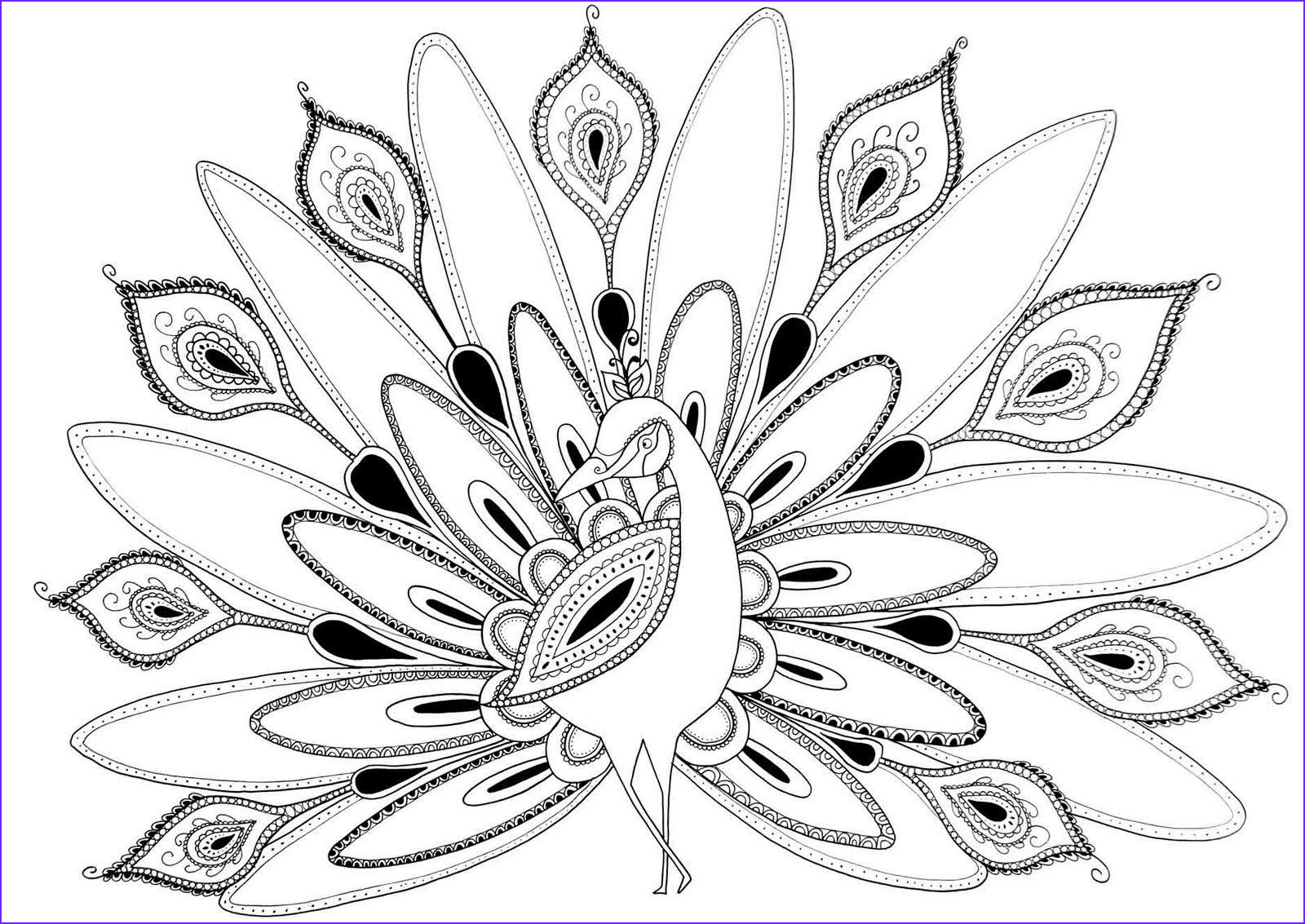 Peacock Coloring Pages Beautiful Photography Cool Coloring Pages for Adults Peacock Coloring Home