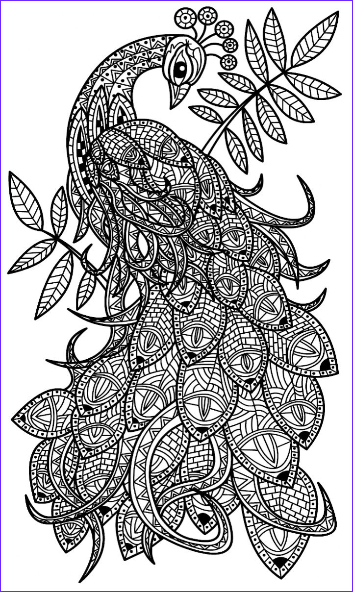 Peacock Coloring Pages Best Of Photos 226 Best Coloring Peacock Images On Pinterest