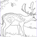 Printable Coloring Pages For Toddlers Awesome Photos Free Printable Deer Coloring Pages For Kids