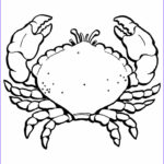 Printable Coloring Pages For Toddlers Elegant Photos Free Printable Crab Coloring Pages For Kids