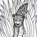 Rainforest Animal Coloring Pages Elegant Photos 129 Best Images About Vbs On Pinterest