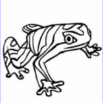 Rainforest Animals Coloring Page Luxury Gallery Rainforest Animal Coloring Pages Az Coloring Pages
