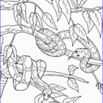 Rainforest Animals Coloring Page New Images Rainforest Coloring Pages Endangered Species Coloring