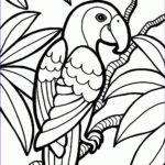 A Coloring Book Luxury Photography Coloring Pages