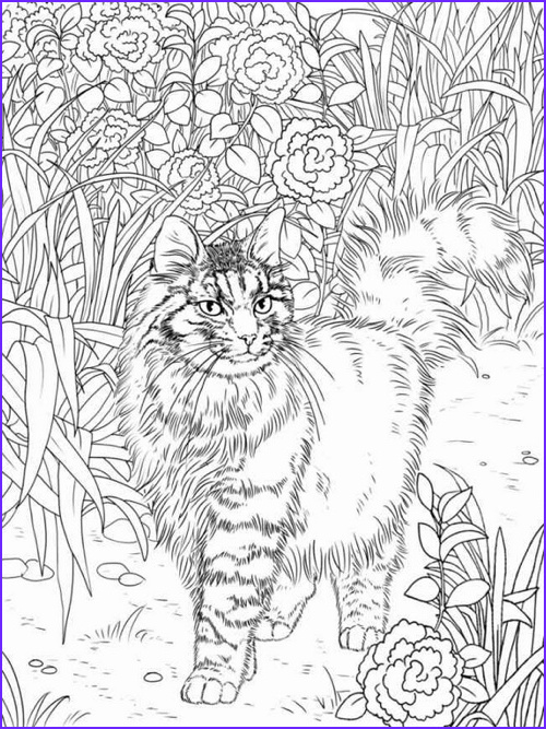 Adult Coloring Book Cat Beautiful Images Best Coloring Books for Cat Lovers Cleverpedia