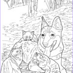 Adult Coloring Book Cat Inspirational Stock Wel E To Dover Publications Ch Lovable Cats And Dogs