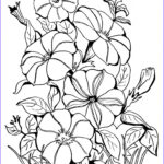 Adult Coloring Book Flowers Beautiful Photos Adult Coloring Page Petunias The Graphics Fairy