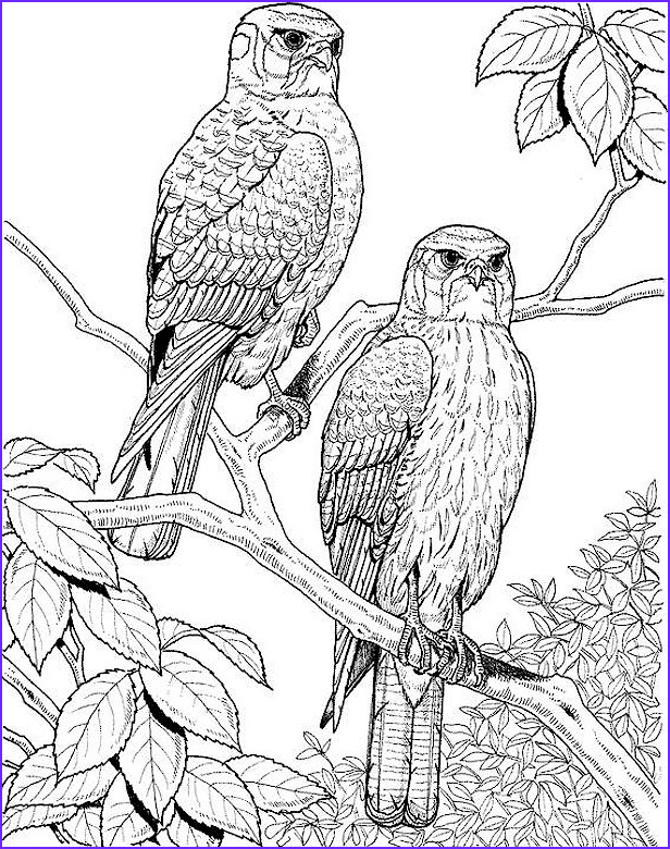 Adult Coloring Pages Birds Awesome Image Coloring Page Falcons Falcons