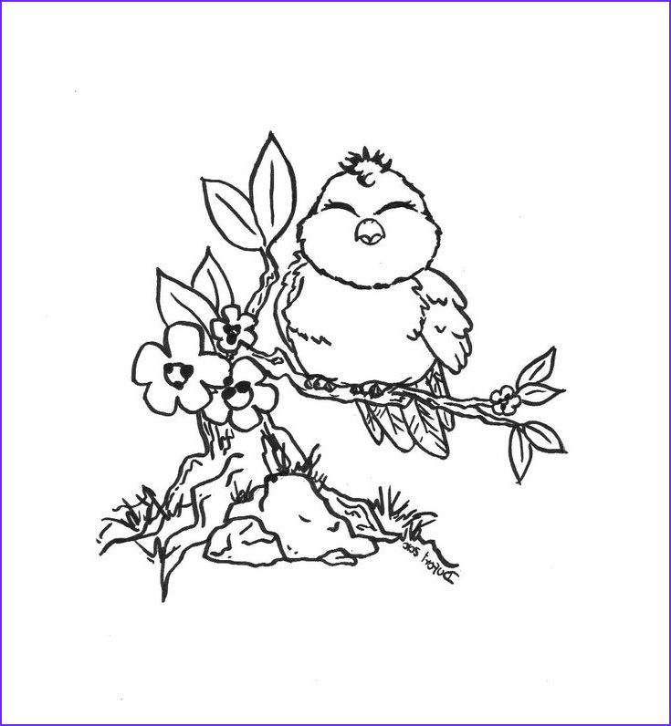 Adult Coloring Pages Birds Awesome Photos Cute Bird Flowers Branch