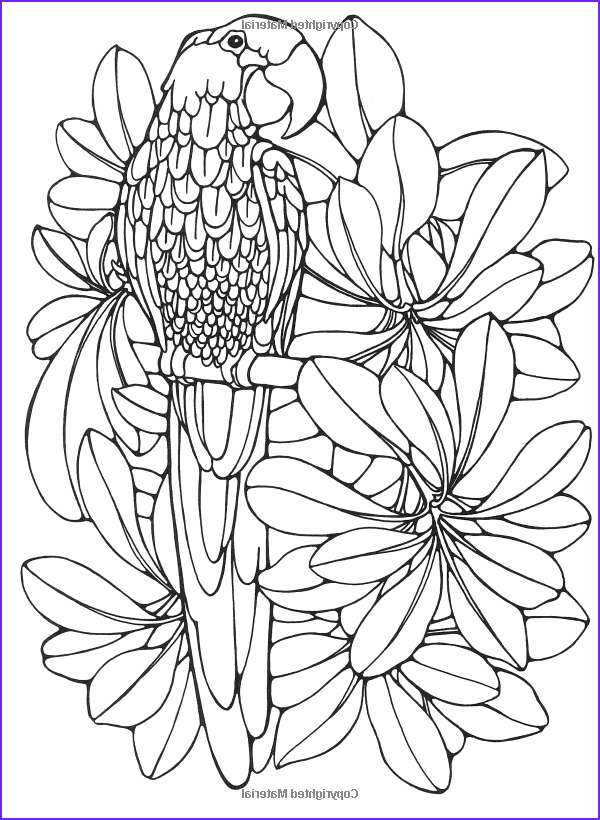 Adult Coloring Pages Birds Beautiful Images Designs for Coloring Birds Ruth Heller