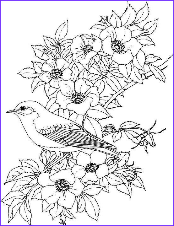 Adult Coloring Pages Birds Beautiful Photos Pin by Marci Peterson On Adult Coloring Pages