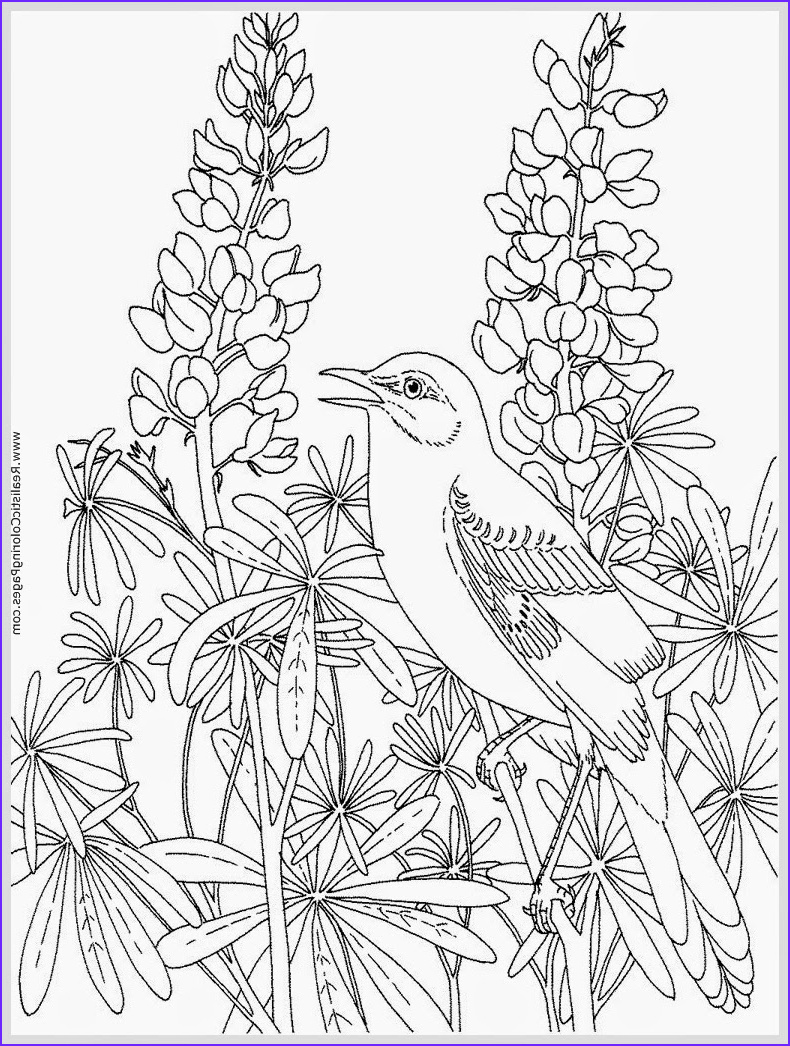Adult Coloring Pages Birds Beautiful Photos Robin Bird Coloring Pages for Adult