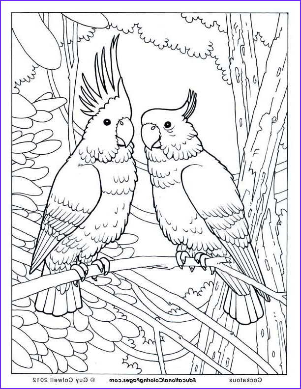 birds book one sample pages