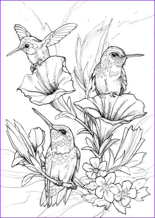 Adult Coloring Pages Birds Best Of Gallery Hung Birds Coloring Page Coloring Pages