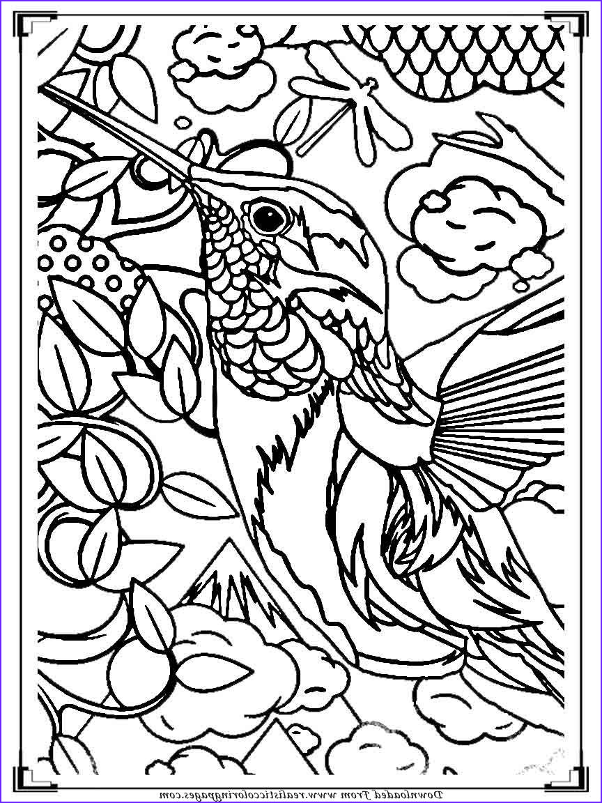 printable birds coloring pages for