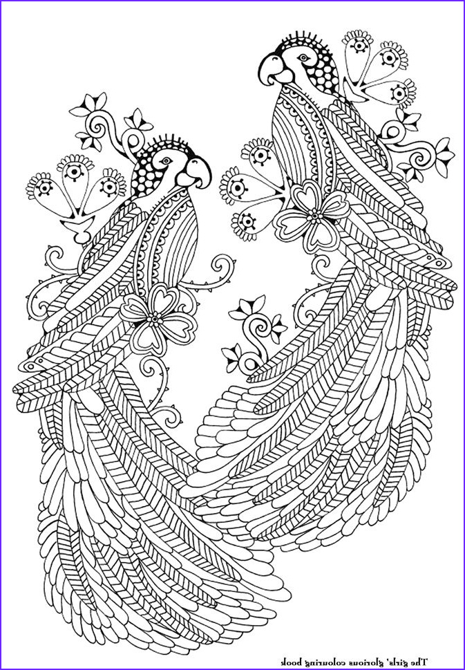Adult Coloring Pages Birds Best Of Photography 228 Best Zentangles Animals Birds Objects Etc Images On