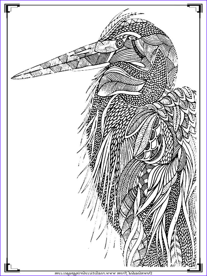Adult Coloring Pages Birds Elegant Photos Printable Birds Coloring Pages for Adults