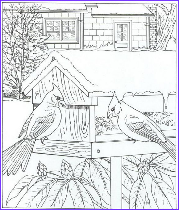 Adult Coloring Pages Birds Luxury Images Pin by Coloring Fun On Birds Pinterest