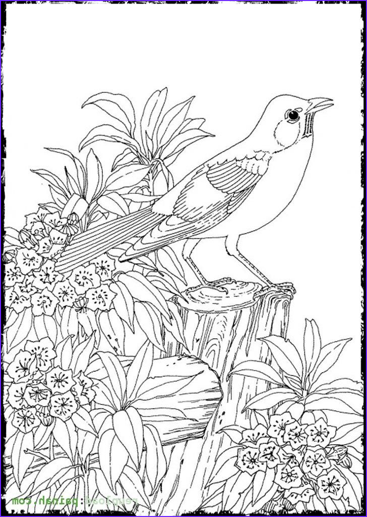 Adult Coloring Pages Birds Unique Gallery Advanced Coloring Pages for Adults Bird Cute