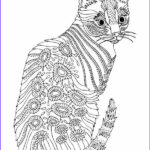 Adult Coloring Pages Cats Beautiful Image 629 Best Adult Colouring Cats Dogs Zentangles Images On