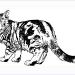 Adult Coloring Pages Cats Elegant Photos Cat Coloring Pages Cat Pinterest